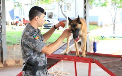 Brigada Militar encantou visitantes com a apresentação de cães