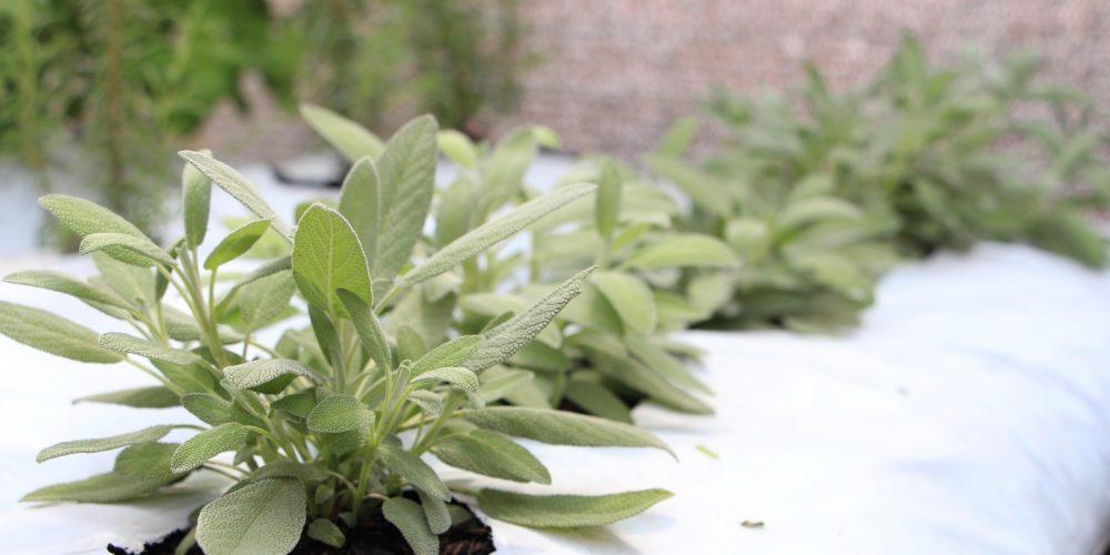 Hortishow Apresenta Tecnologias Para Cultivo De Hortigranjeiros