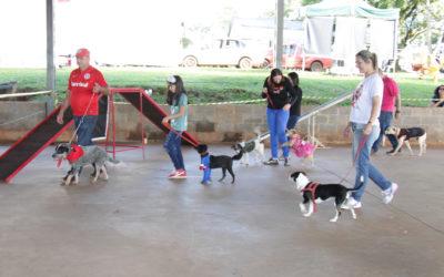 Desfile de Animais de Estimação emociona público do 32º Hortigranjeiros